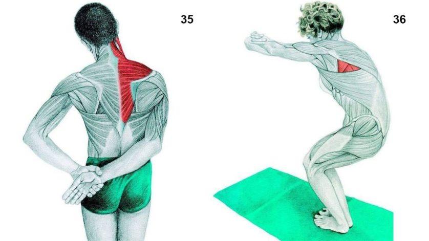 alongamento musculos 17