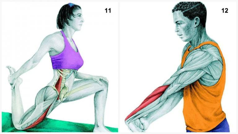 alongamento musculos 5
