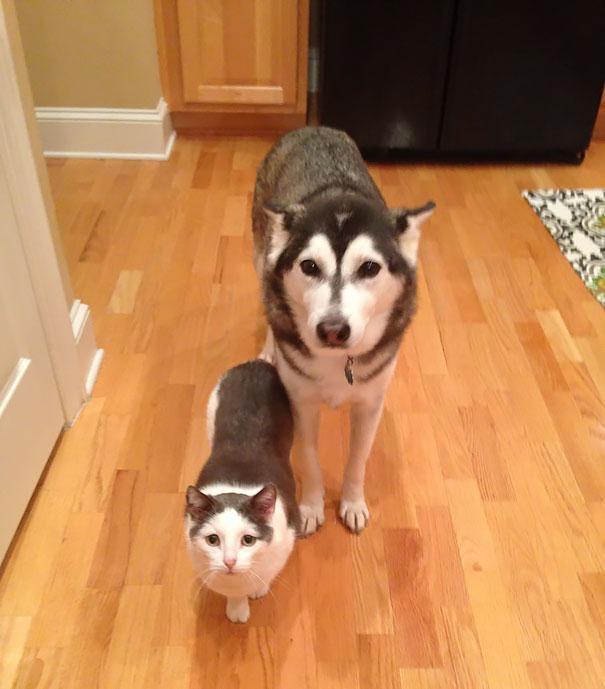 animais parecidos irmaos de maes diferentes (10)