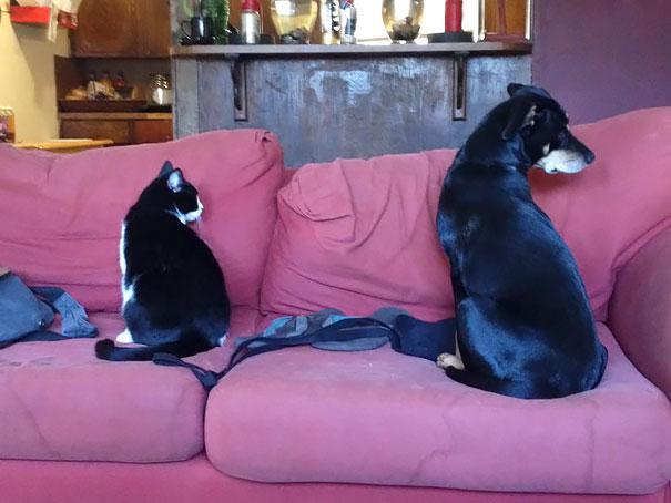 animais parecidos irmaos de maes diferentes (13)
