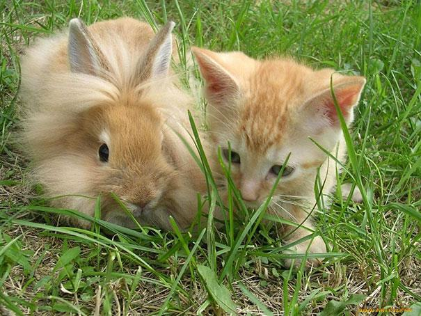 animais parecidos irmaos de maes diferentes (2)