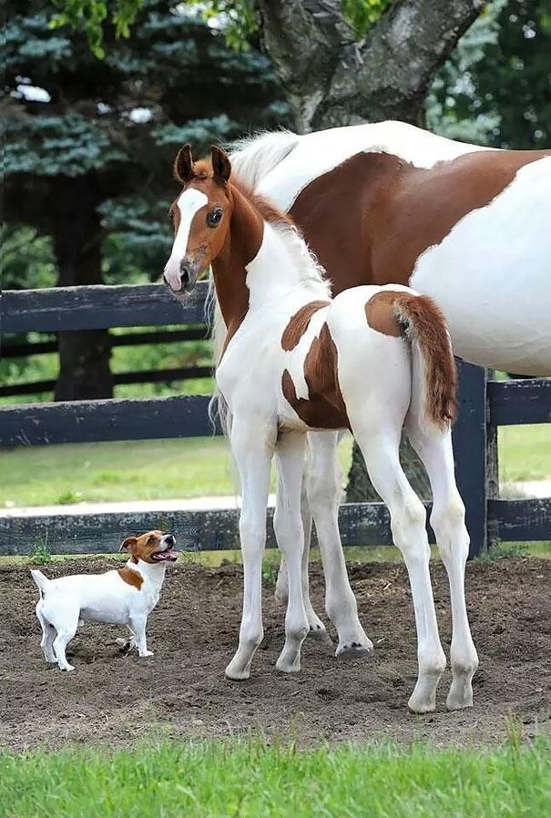 animais parecidos irmaos de maes diferentes (3)