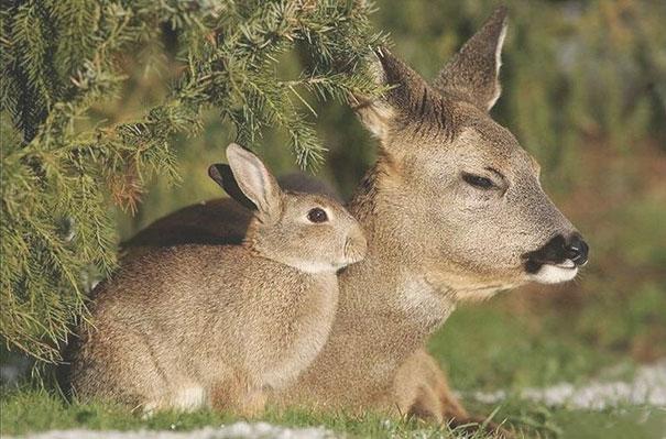 animais parecidos irmaos de maes diferentes (4)