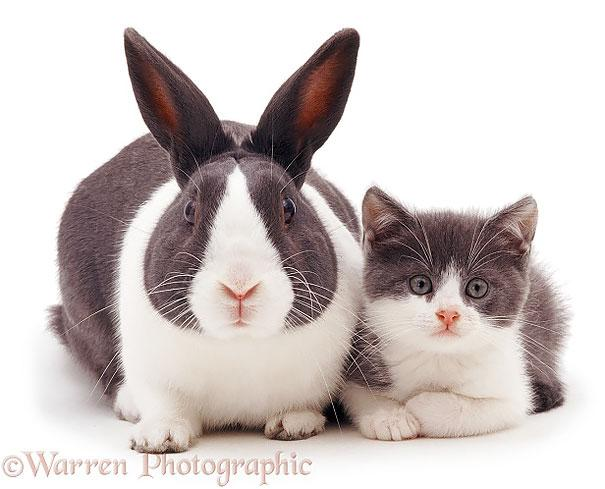animais parecidos irmaos de maes diferentes (5)