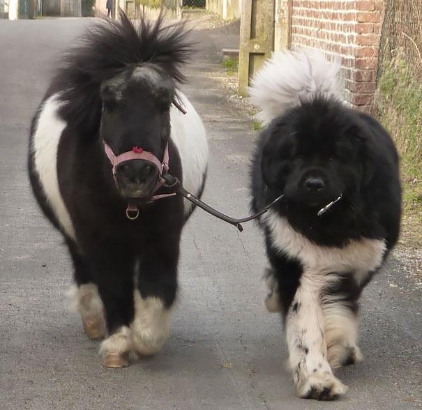 animais parecidos irmaos de maes diferentes (7)