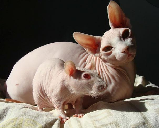 animais parecidos irmaos de maes diferentes (9)
