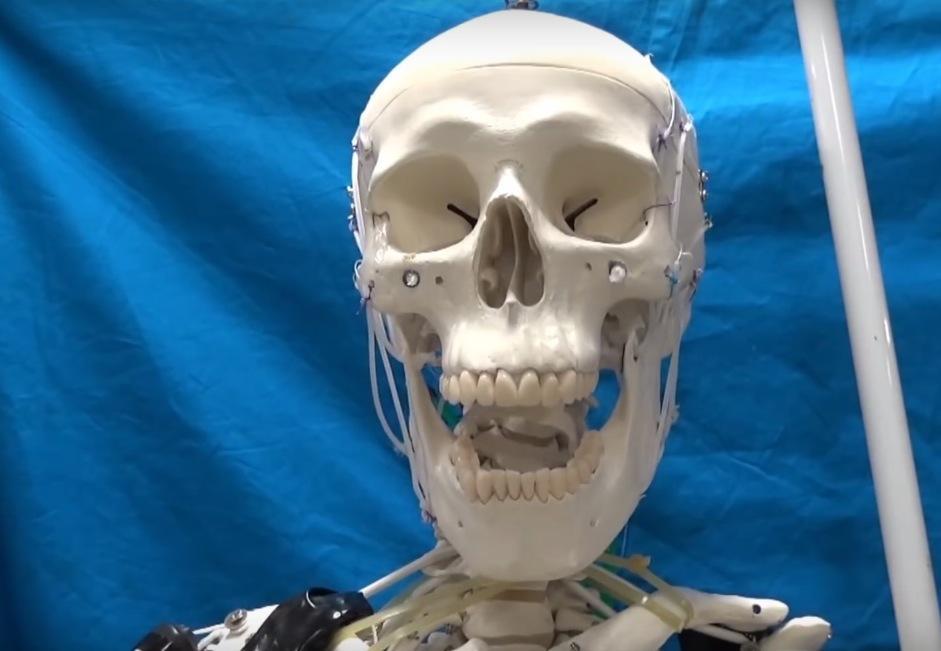 robo musculatura humana 2