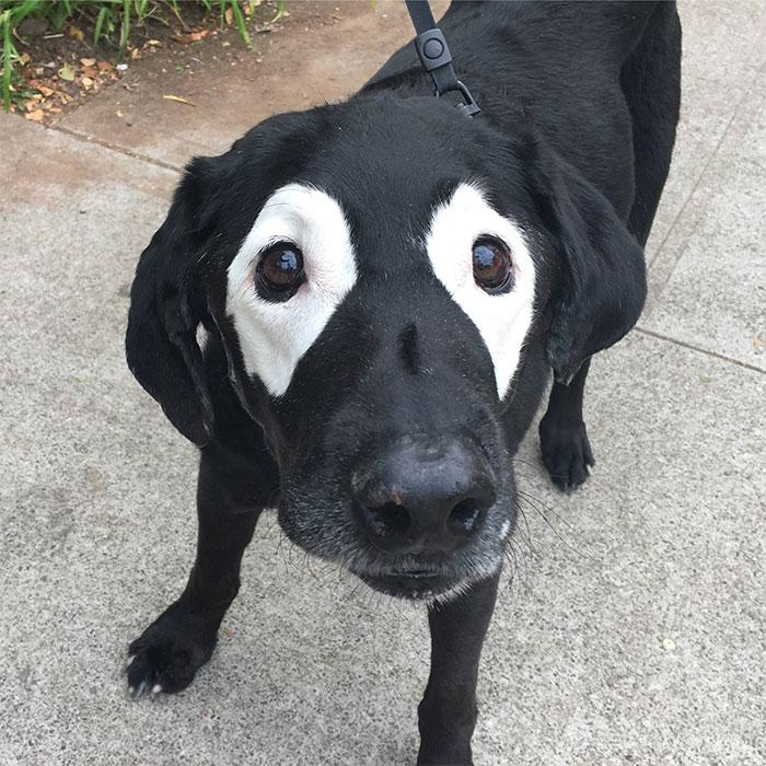 cao vitiligo original