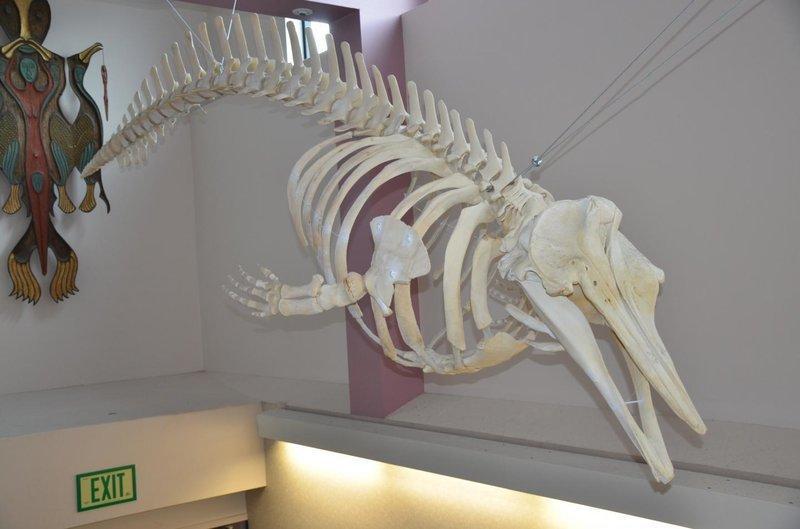 nova especie baleia