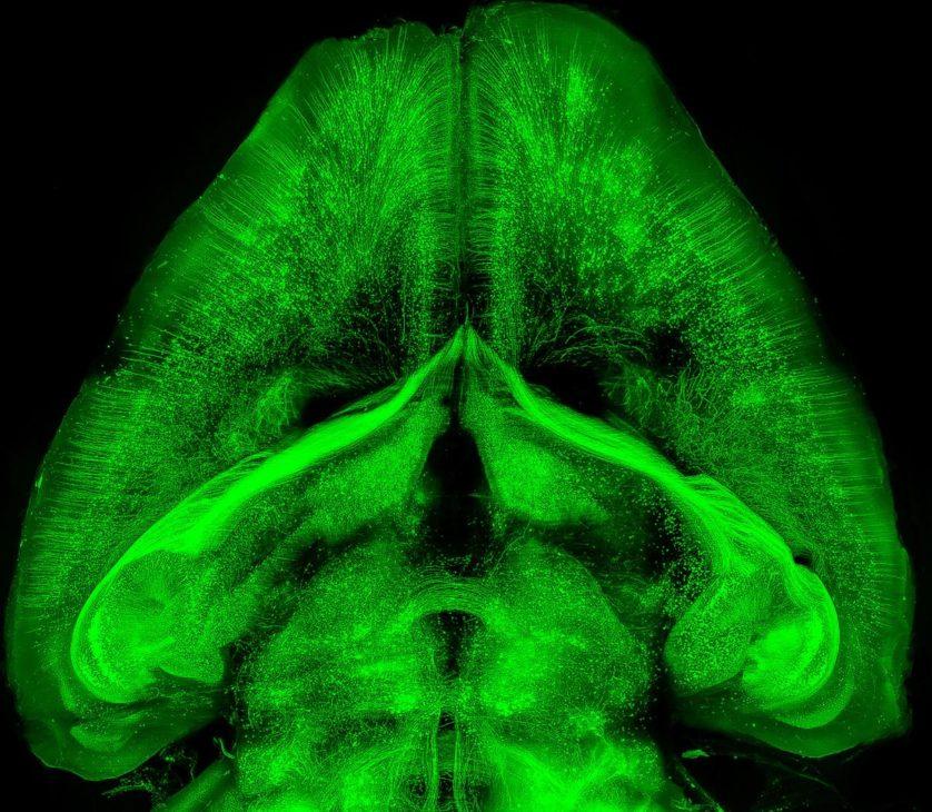 rato transparente que brilha no escuro (2)