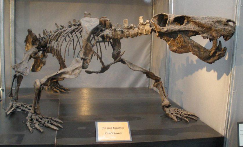 animais-predadores-dinossauros-7