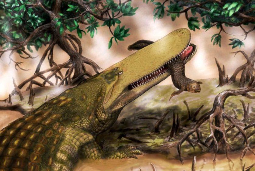 animais-predadores-dinossauros-8