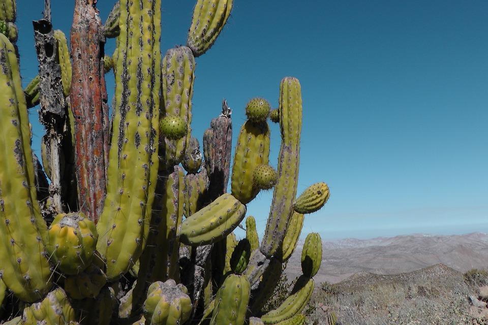 cactus-499876_960_720