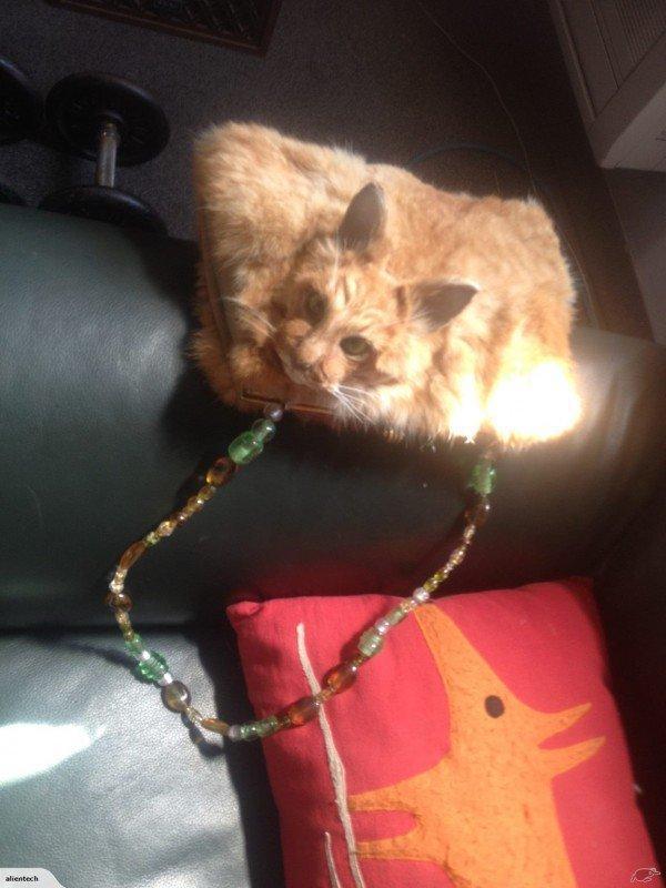 gato-empalhado-bolsa