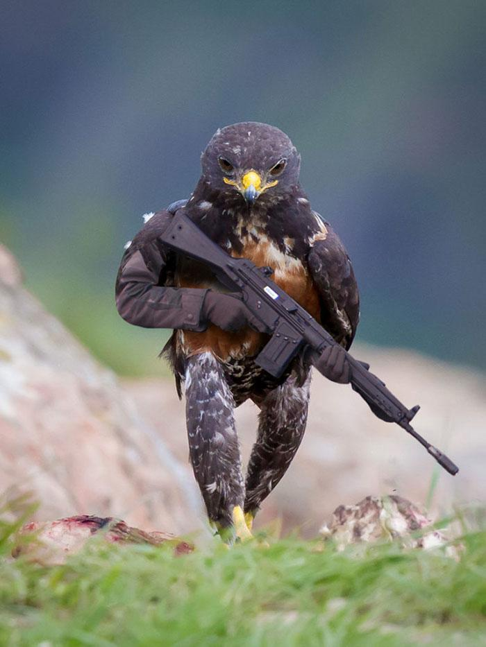aguia-photoshop-1