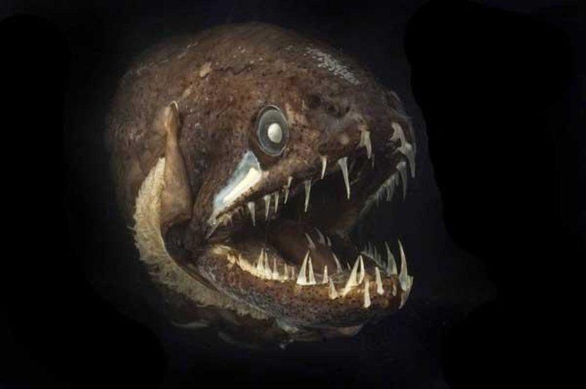 assustadoras-criaturas-marinhas-8