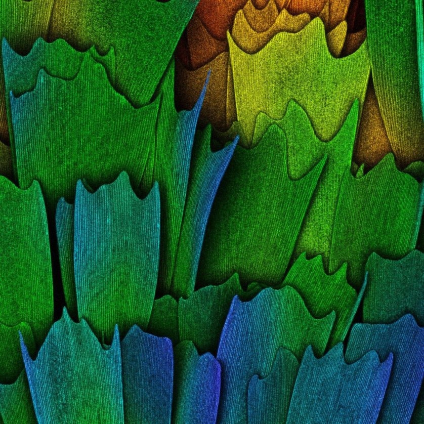 foto-micriscopica-asa-de-borboleta
