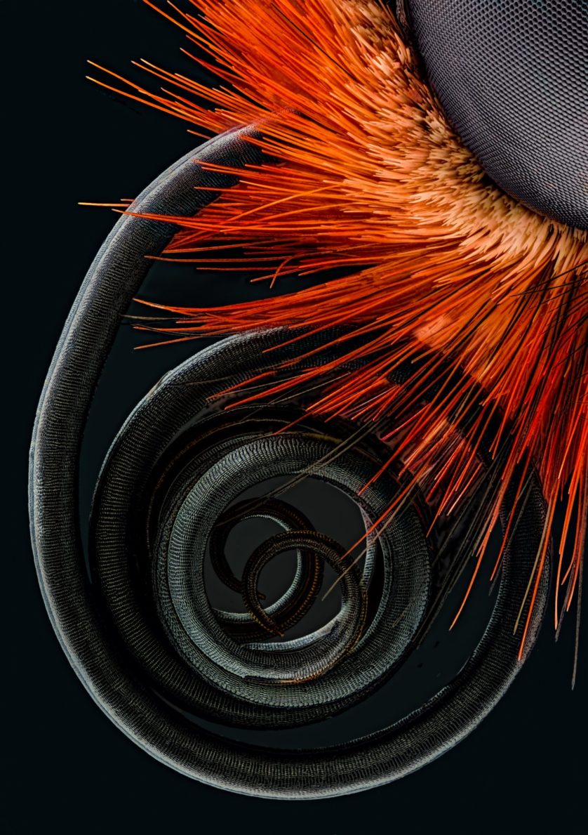 fotos-microscopicas-borboleta