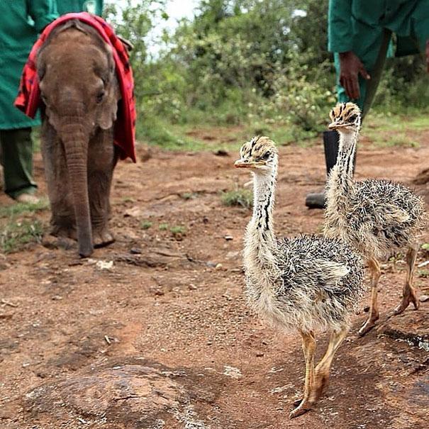 jotto-elefante-bebe-e-avestruz