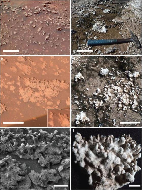A sílica opalina de Marte (esquerda) ocorre em massas nodulares com estruturas digitadas que se assemelham às de El Tatio (direita)