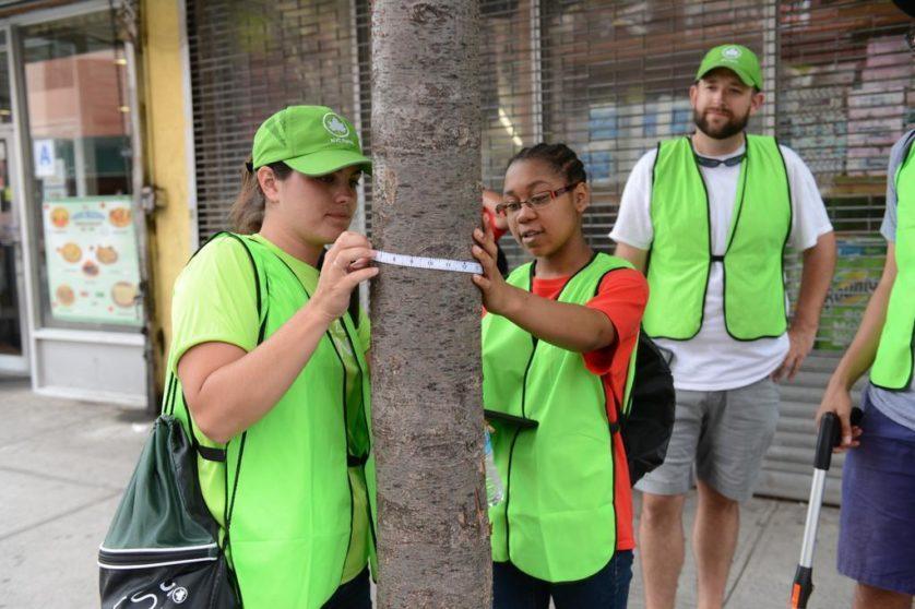 voluntarios-mapa-arvores-nova-york