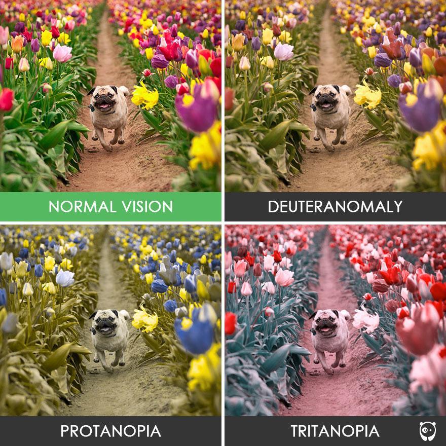 10 imagens inacreditáveis que mostram como as pessoas daltônicas enxergam