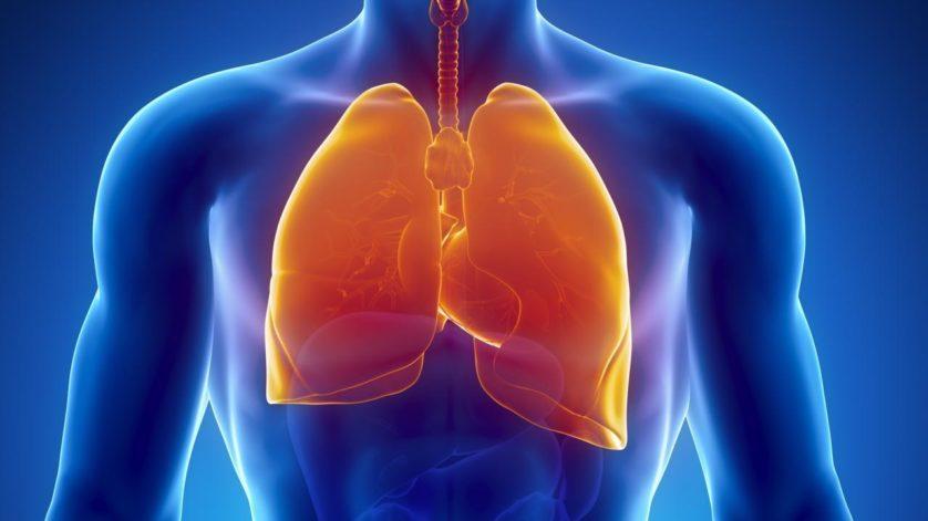 http://hypescience.com/descoberta-uma-inesperada-funcao-dos-pulmoes-fabricar-sangue/