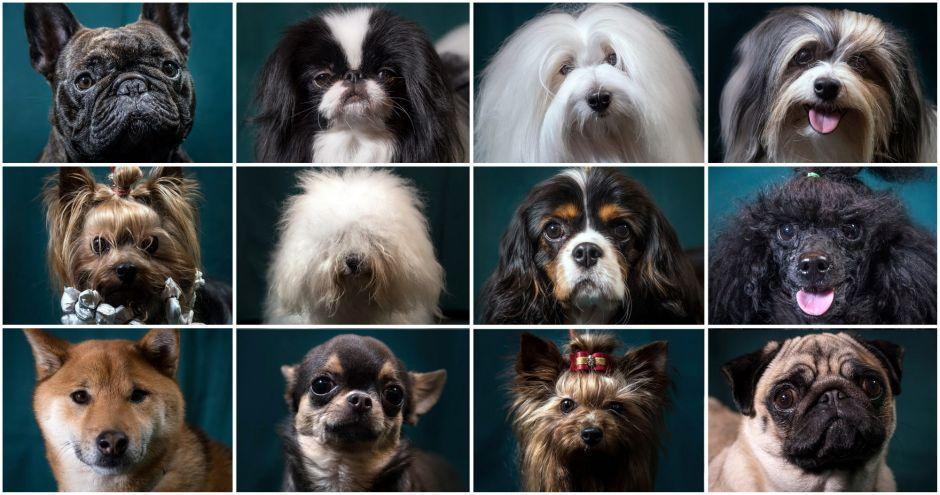 Revelada a história oculta da diversidade canina