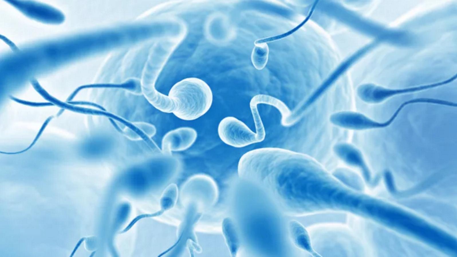 Contagem de espermatozoides caiu em 50% — Estudo alerta