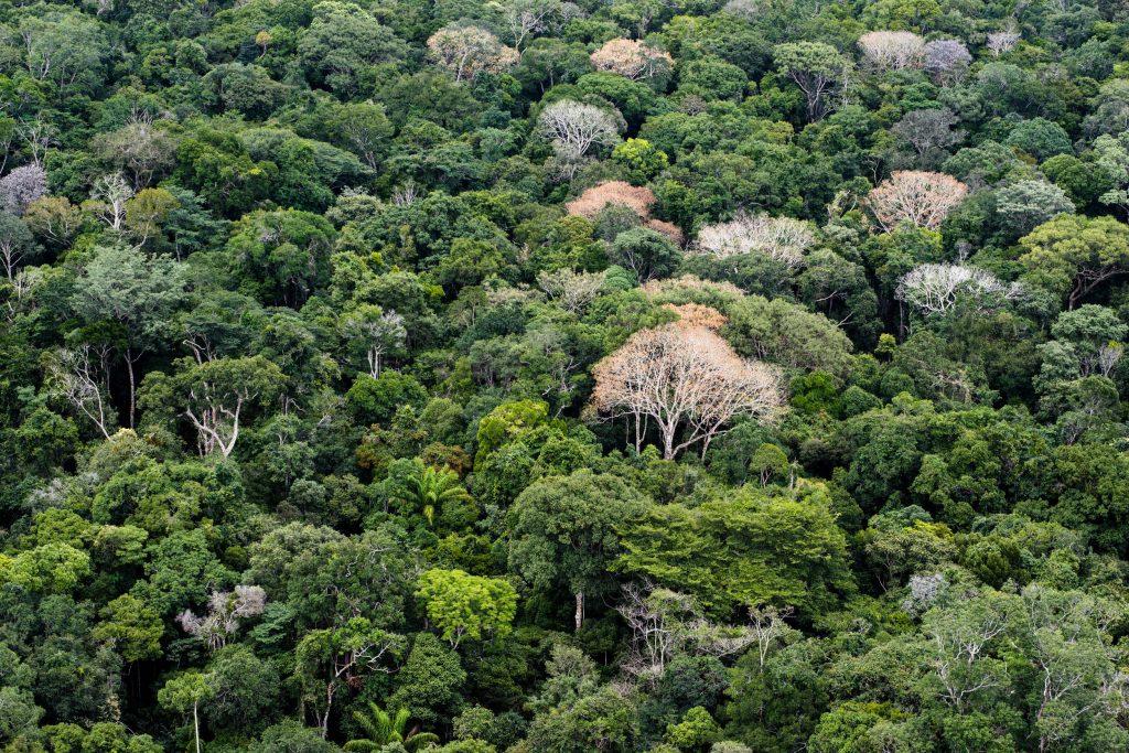 Gisele Bündchen critica Temer após extinção da Reserva Nacional do Cobre