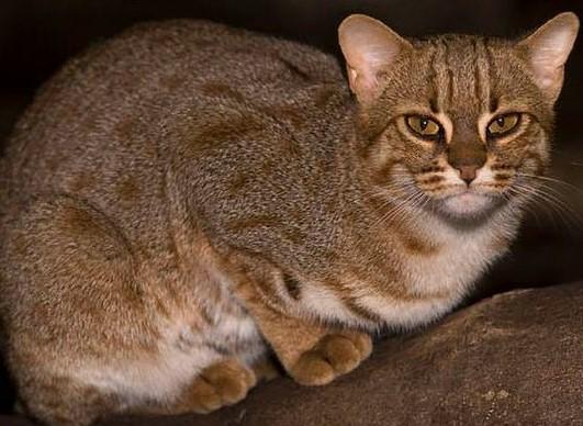 10 gatos incríveis e desconhecidos