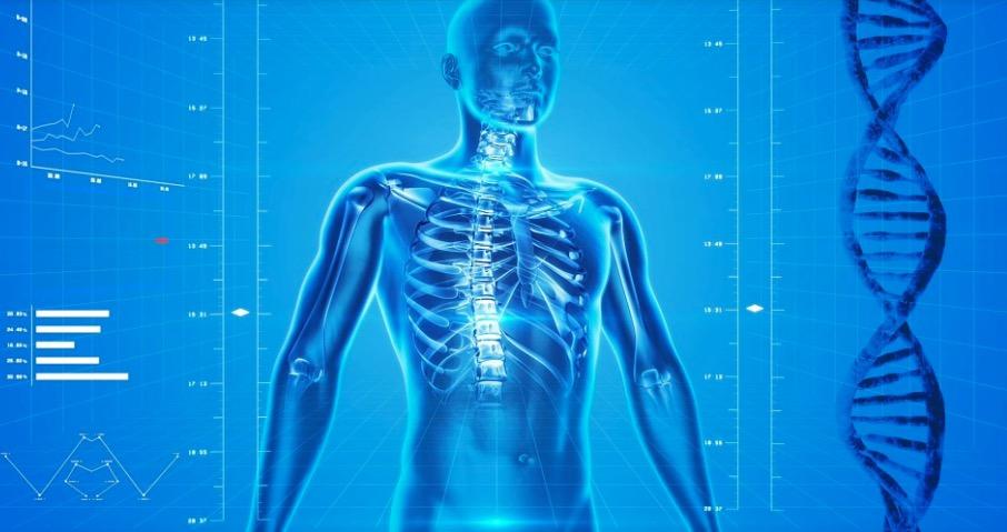 Americanos descobrem um 'novo' órgão do corpo humano