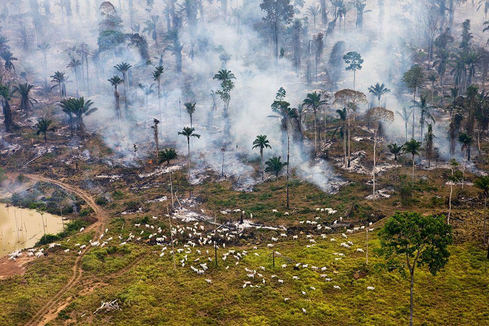 Estamos totalmente ferrados, diz novo relatório de 1.800 páginas sobre o meio ambiente