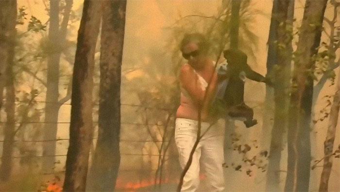 Mulher salva coala de incêndio com a camiseta do próprio corpo
