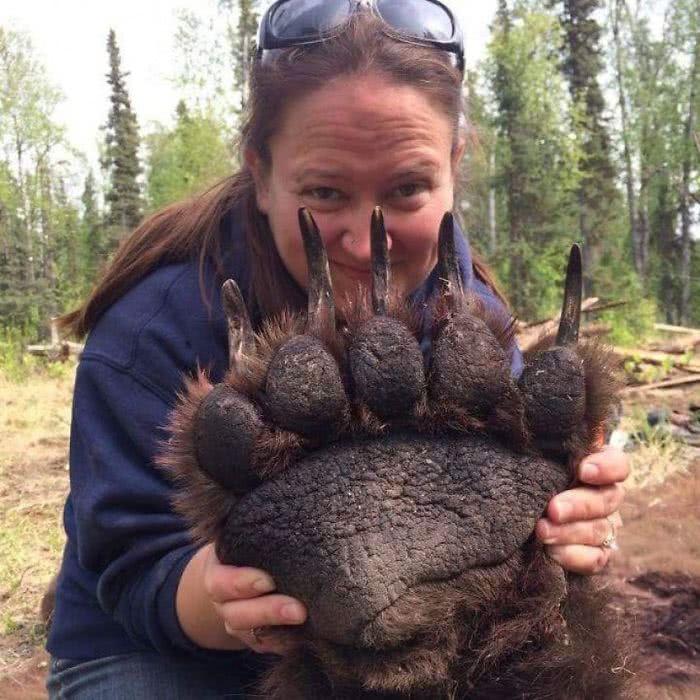 A pata de um urso comprada a minúscula cabeça de um humano
