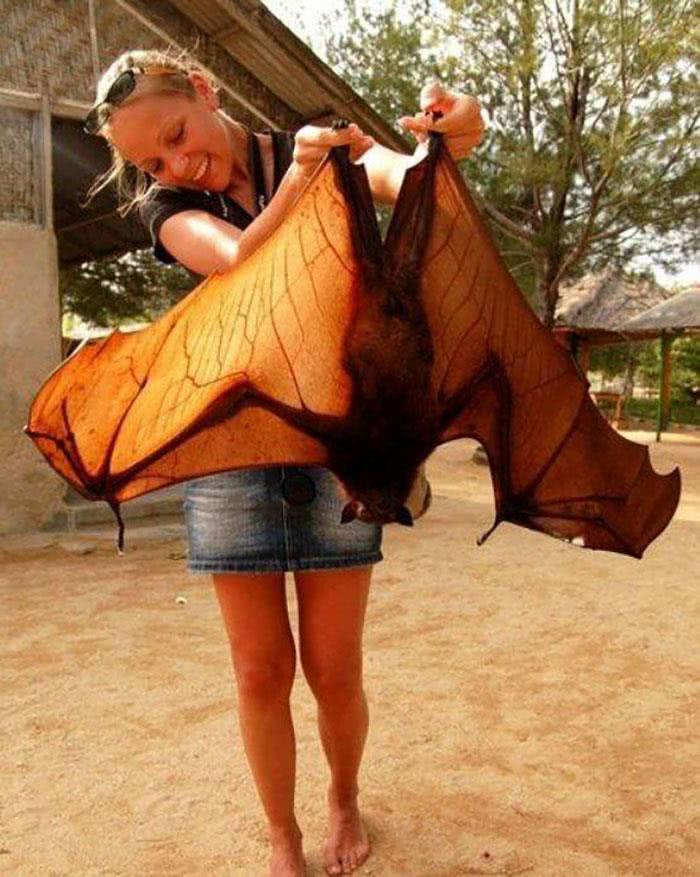 Um morcego frugívoro
