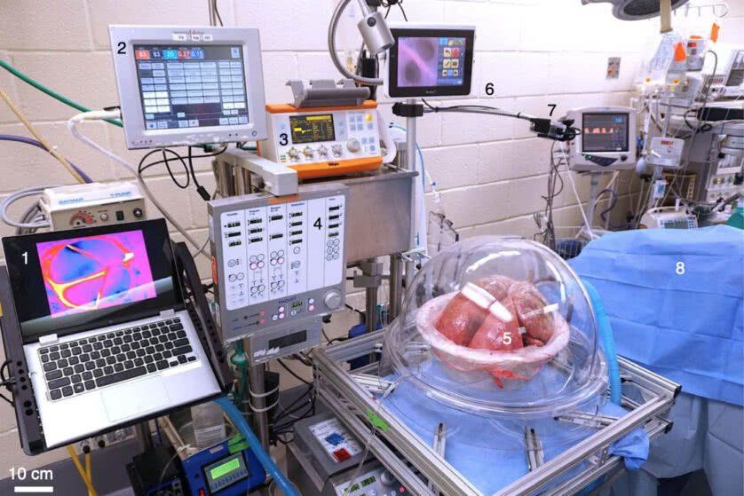 A configuração do experimento. O porco é o número 8 da imagem