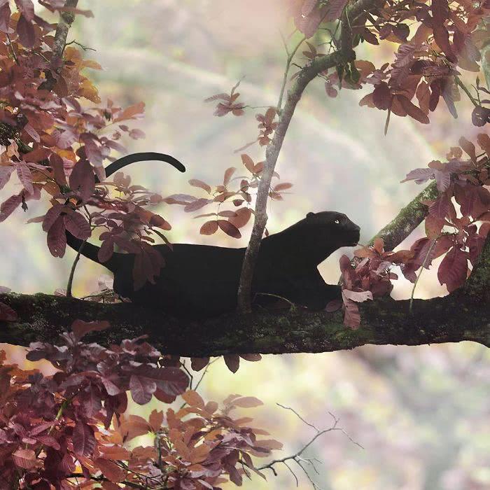 pantera negra e folhas marrons