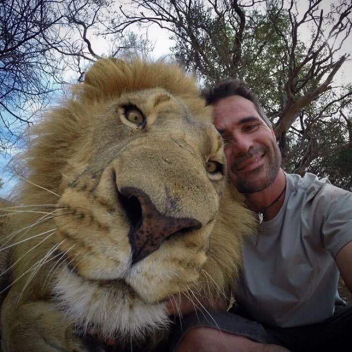 A cabeça de um leão comparada a de um humano