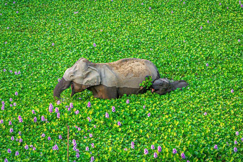 Foto engraçada de elefantes