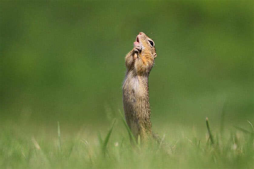 Foto engraçada de cão da pradaria