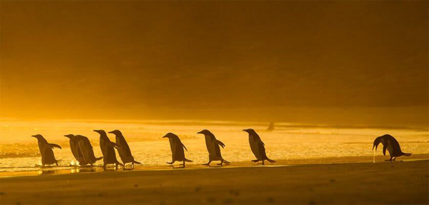 Foto engraçada de pinguins