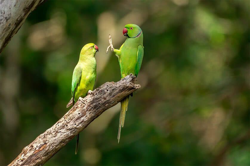 Foto engraçada de pássaros