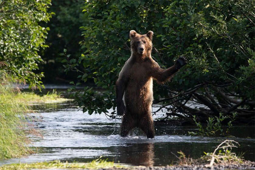 Foto engraçada de um urso em pé