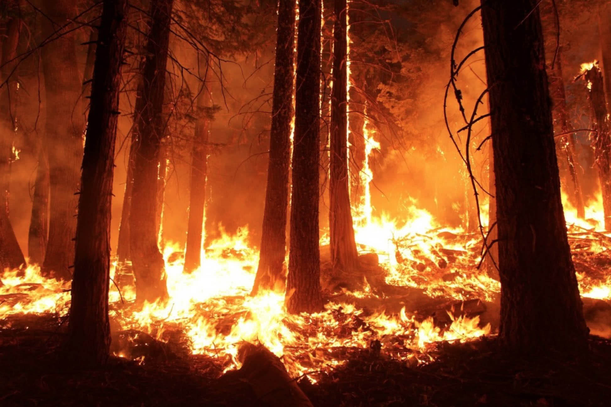 Incêndios florestais contribuem para transformar a amazônia em savana