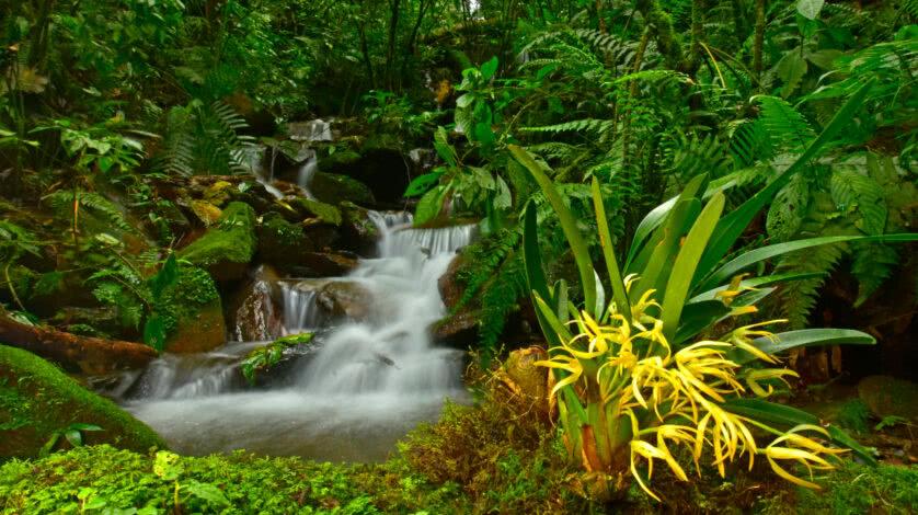 floresta-andes-zongo