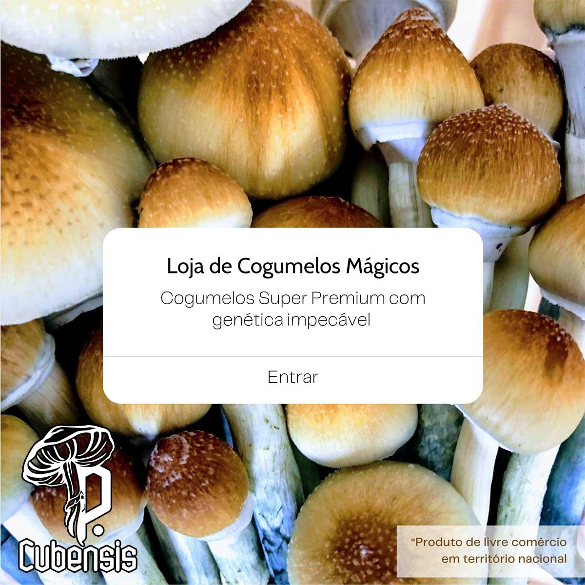 Banner Cogumelos Mágicos