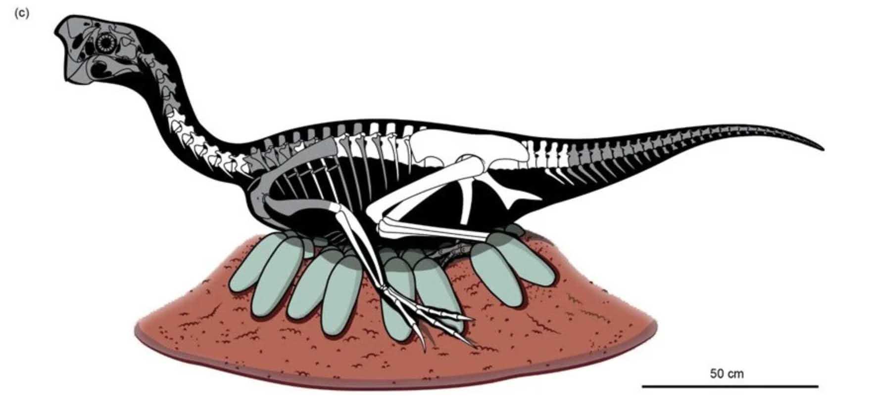 dinossauro chocando ovos fossil